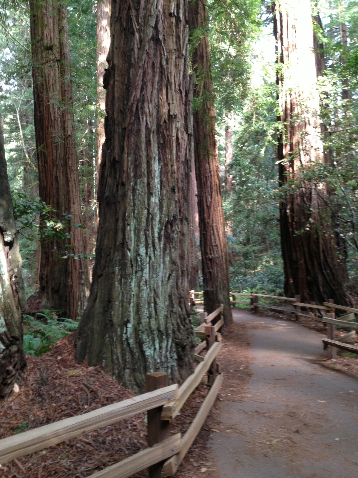 World S Tallest Plant A Redwood Tree Science Worksheets