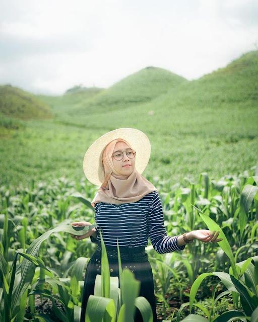 Mode macro di bukit Teletubbies Gunung Kidul