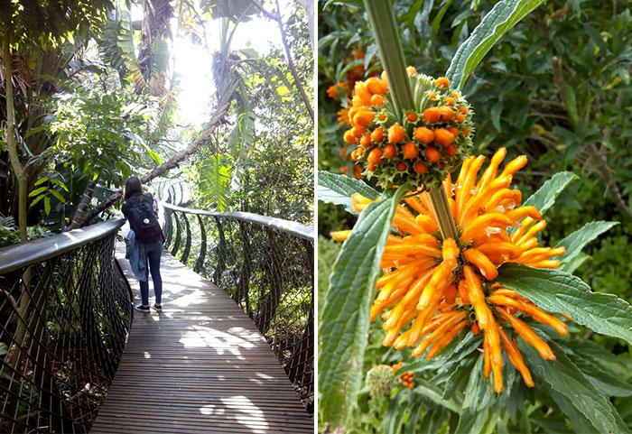 La Böcöque. Aventuras en Sudáfrica. jardín botanico