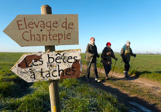 Elevage de Chantepie