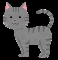 猫の模様のイラスト(サバトラ)