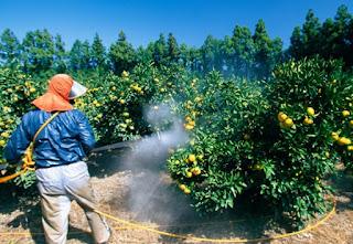 स्लो पाइजन धीरे धीरे हमारे परिवार को बीमारी के दलदल में खीच रहा है more pesticide means poising fruits and vegetables