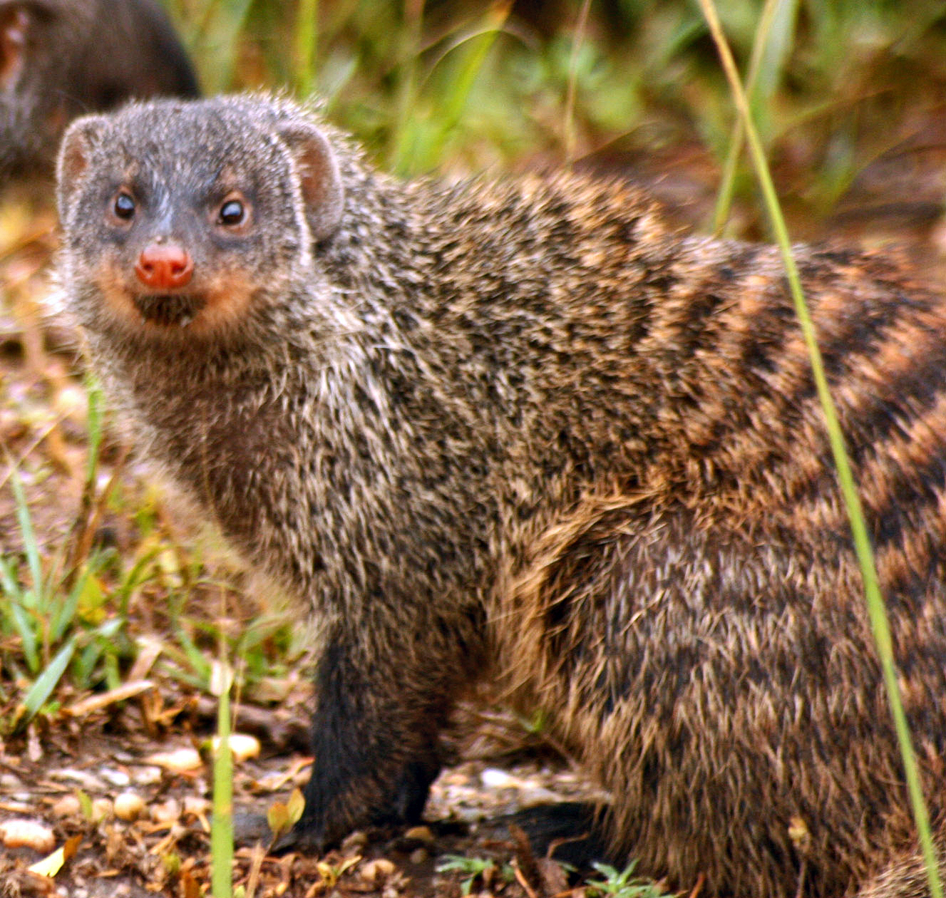 Panchatantra Stories || The Brahmin & The Mongoose Story ||