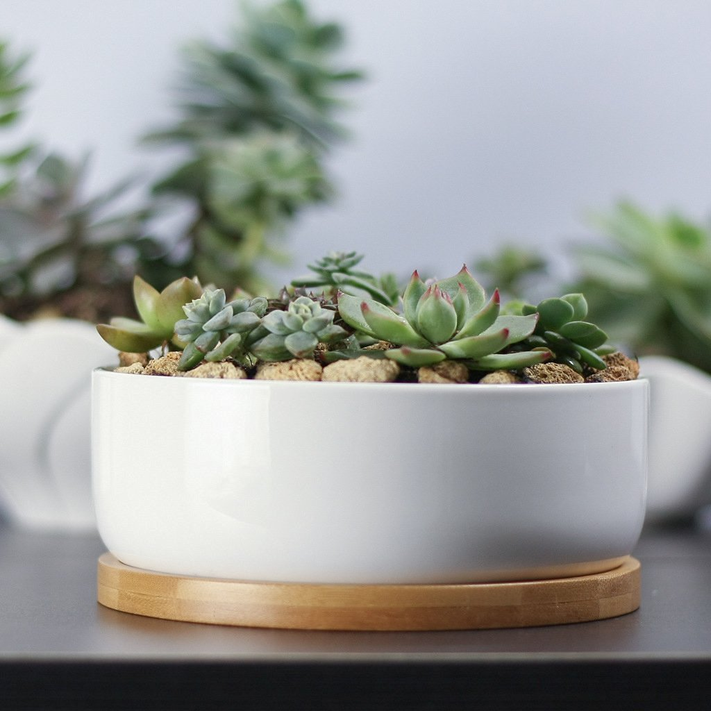 14 Ways to Display Succulents - Succulent Garden