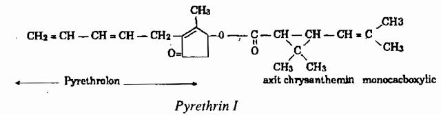 Thành phần hóa học Cúc Trừ Sâu - Chrysanthemum cinerariaefolium - Nguyên liệu làm thuốc Có Chất Độc