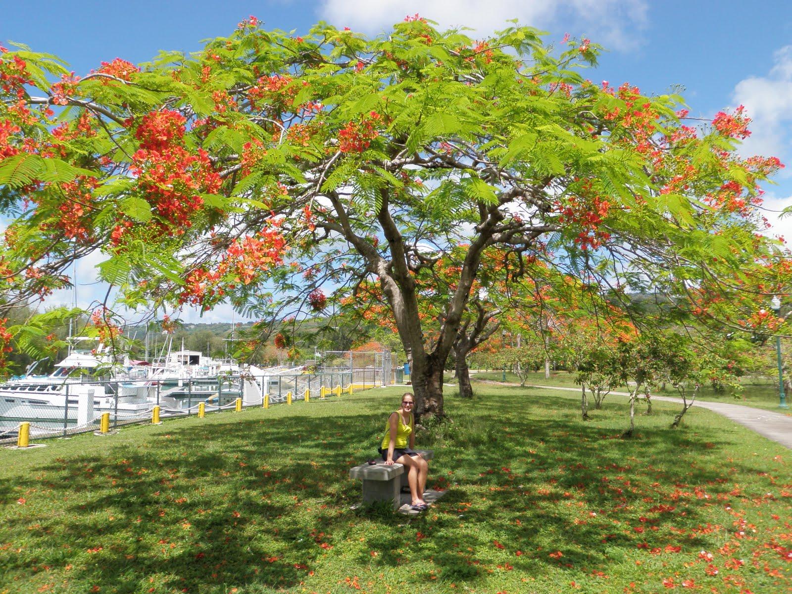 Saipan: Teaching, Living, & Recreation: Memorial Day 2011