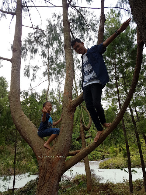 hutan pinus lahendong tomohon