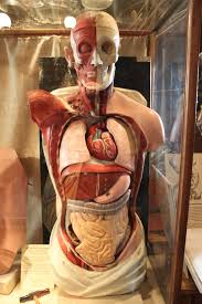 Berikut Adalah Gejala Terkena Nya Penyakit Liver Pada Tubuh