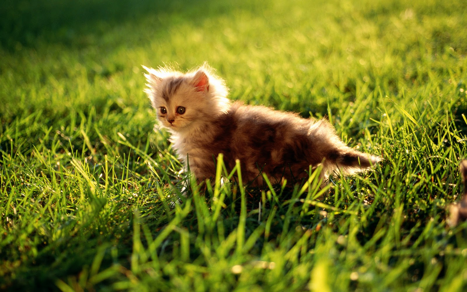 Cats High resolution Wallpapers