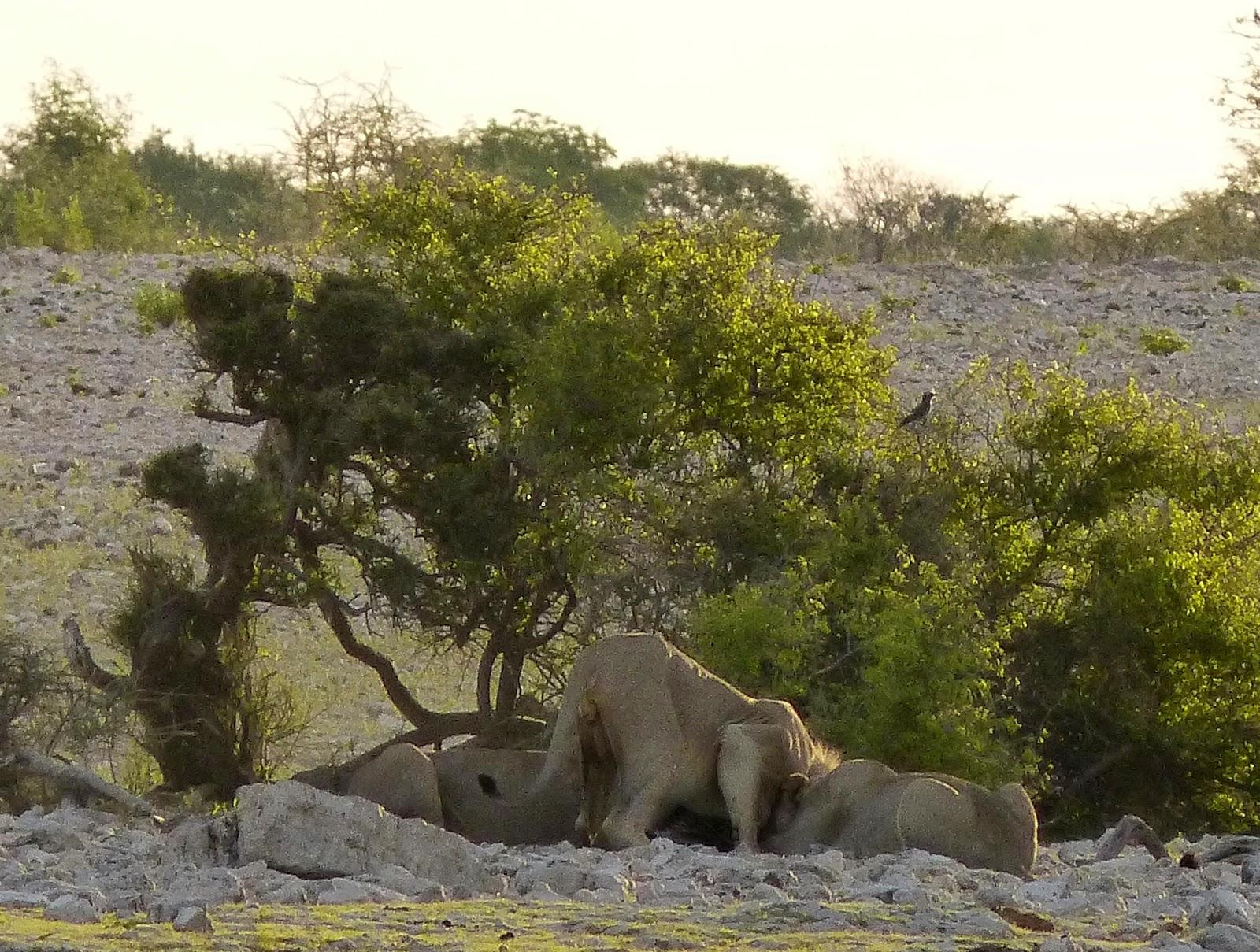 remettre safari en moteur de recherche