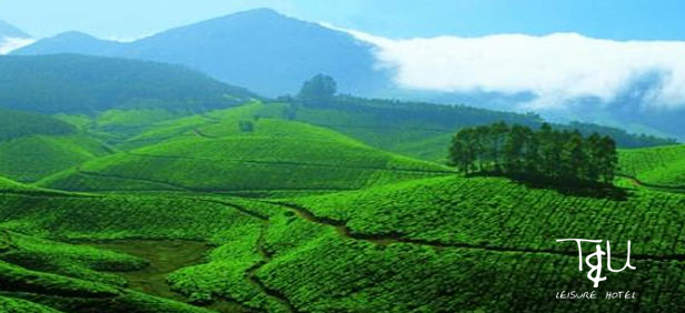 Best Resort in Munnar