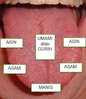Mengapa MSG (Monosodium Glutamate) Memberikan Gurih atau Lezat Pada Makanan