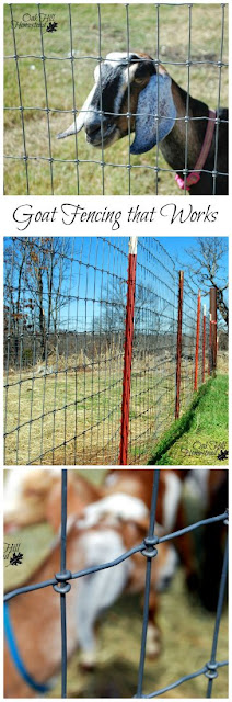 Goats are hard to keep in! Here are the fencing types that have and haven't worked for us. | from Oak Hill Homestead