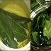 LAUREL LEAVES: By Simply Using This To Remove Varicose Vein, Joint Pain, Lack of Memory, And Many More