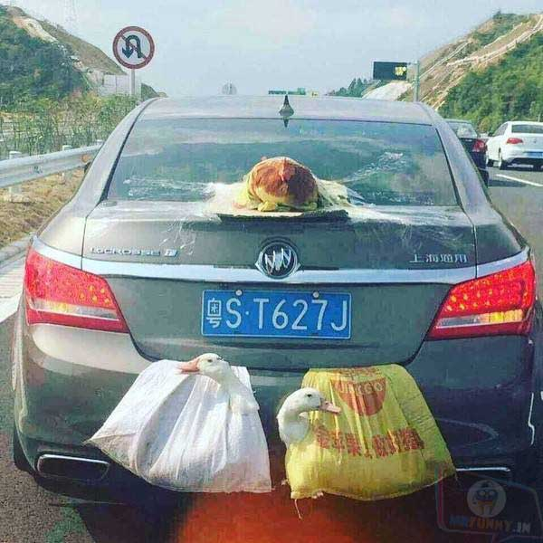 Transporting birds without trashing the car...