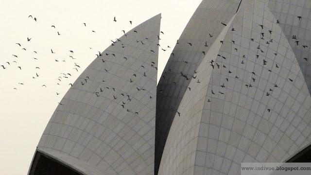 Kyyhkyset lentävät Lotus-temppelin ympärillä Delhissä Intiassa