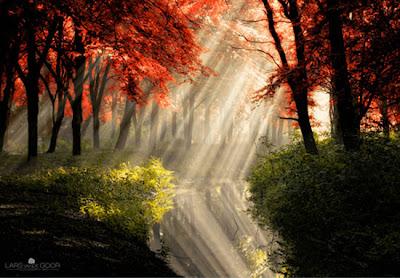 bosque luz y sombra y agua