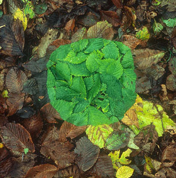 Andy Goldsworthy green circle