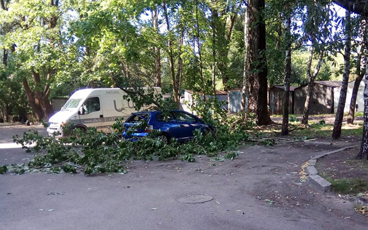 Koka zars uzkrīt uz vieglā auto