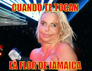 Cuando me tocan la flor de Jamaica. 'Lúpulo de malta'