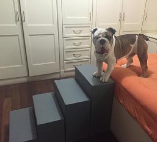 cães grande escadas