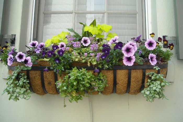 C mo decorar una ventana con plantas guia de jardin for Como adornar un jardin con plantas