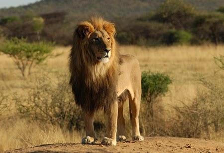versek idézetek bölcsességek Versek, idézetek, bölcsességek: Az öregasszony meg az oroszlán