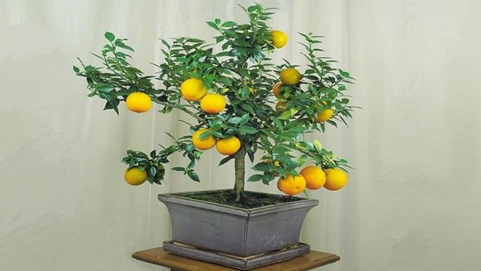 Come coltivare le piante di frutta in casa - Video