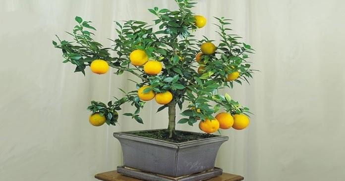 Piante di frutta come coltivare le piante di frutta in for Piante da frutta nane prezzi