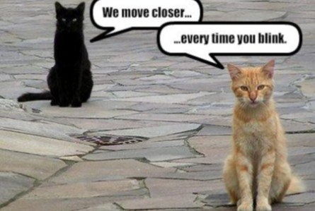 Funny Moving Pictures 93