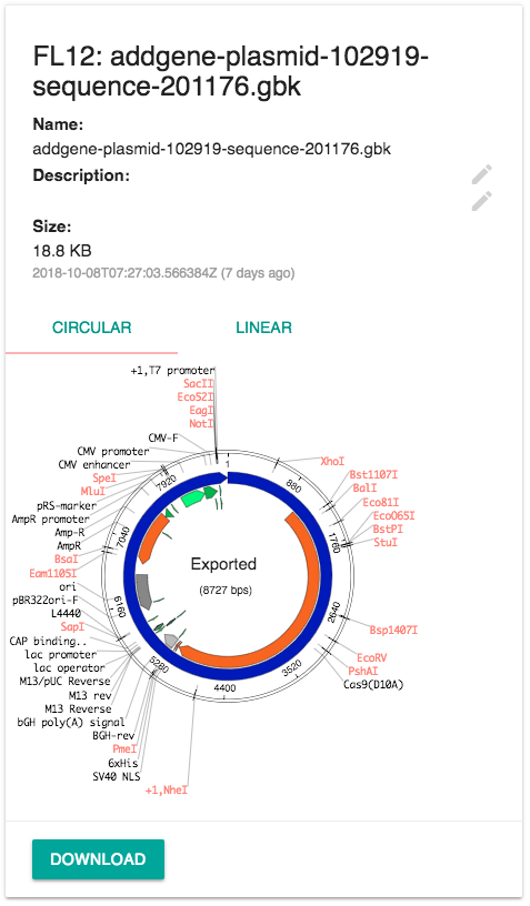 Genbank File Preview For a Plasmid Map (Circular)