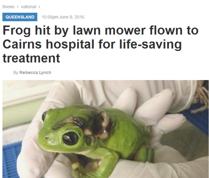 Shuu? Frog hit by lawn mower flown to hospital to receive treatment
