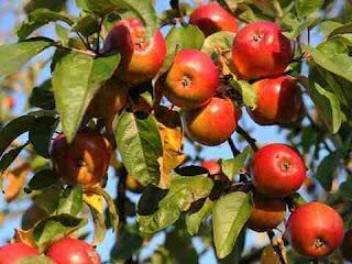 सपने में सेब देखना sapne me apple dekhna