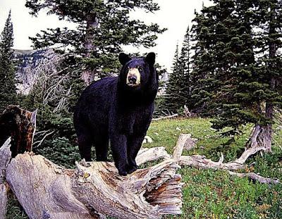 Beautiful Cute Teddy Bear HD Wallpapers