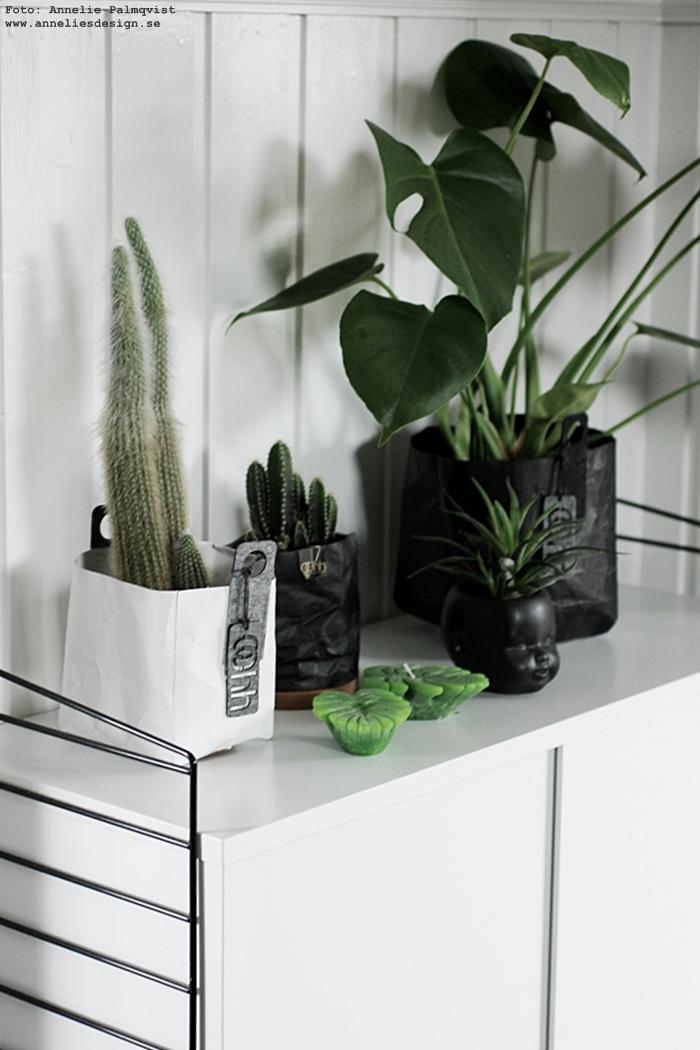 annelies design, webbutik, webshop, nätbutik, inredning, Oohh krukor, kruka, dekoration, kaktus, kaktusar, monstera, ljus, gröna växter, grönt,