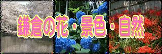 鎌倉で見つけた花