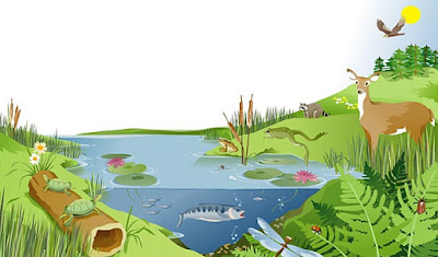 jaring jaring makanan,  rantai makanan dan jaring jaring makanan,  contoh rantai makanan,  piramida makanan,  rantai makanan di laut  rantai makanan di sawah,  contoh rantai makanan di sawah,  pengertian rantai makanan