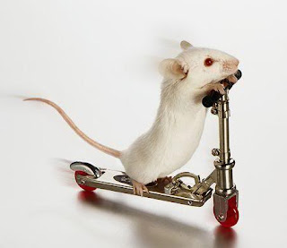 Velocidad y precisión con el ratón