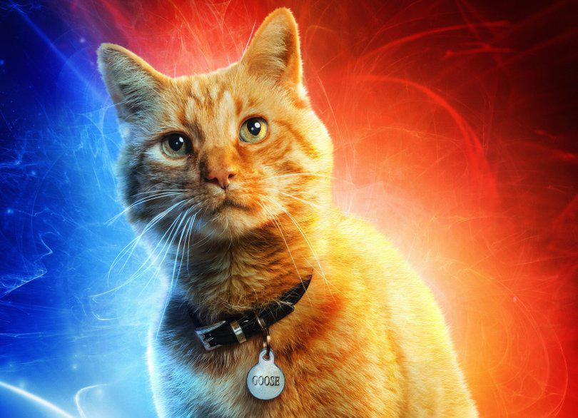 velký třesk teorie kočička xxx porno milfs