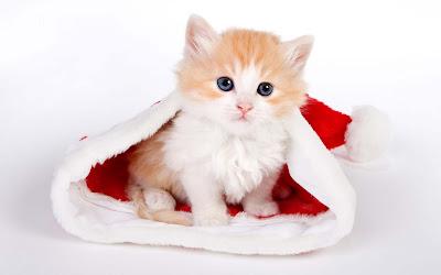 cattig-kitten-Santa-Claus-photos