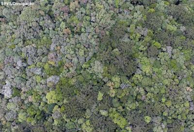 projeto conexão araucária, restauração ecológica, sociedade de pesquisa em vida selvagem e educação ambiental, Paraná, Mata Atlântica, conservação da natureza, novo código florestal, araucária, recuperação ambiental, icmbio, floresta, natureza, meio ambiente