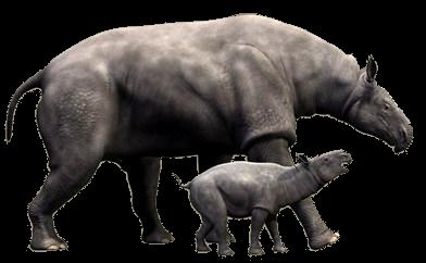 Biggest animal of the world / Duniya ke sabse bade janvar / दुनिया के सबसे बड़े और खतरनाक जानवर
