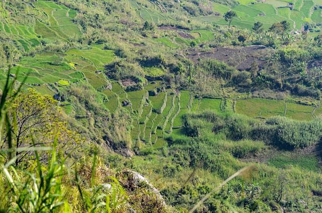 8TH WONDER TRAVEL DESTINATION HIDDEN FIDELISAN RICE TERRACES SAGADA Up Closer