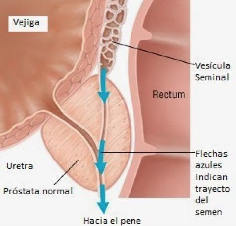 Conociendo mas sobre anatomia - 2 part 3
