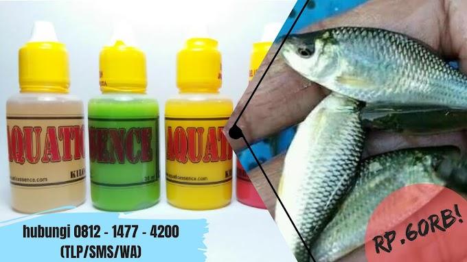 Essen Ikan Nilem 2019