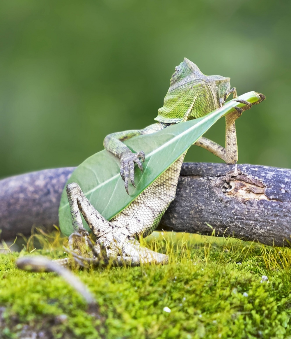 The 100 best photographs ever taken without photoshop - Rango plays guitar