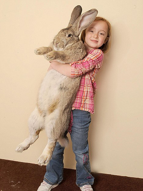 Image result for holding a bunny