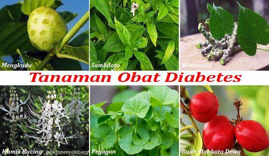 Ada beberapa jenis tumbuhan obat diabetes paling ampuh di dunia untuk menurunkan kadar gula darah. Selengkapnya cek di artikel ini.
