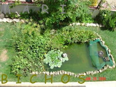 Vista superior de un estanque dividido