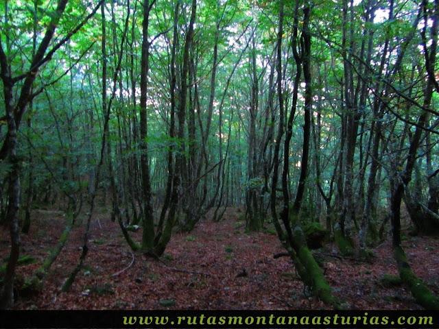 Ruta de los Arrudos y Corteguerón: bosque